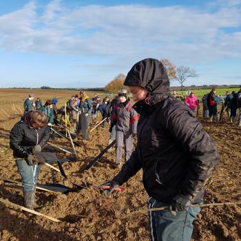 Plantation des arbres avec les étudiants (Nov 2018)