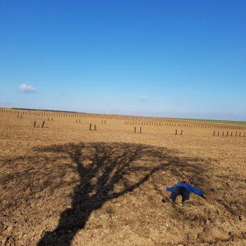 Suivi de l'ombrage des arbres