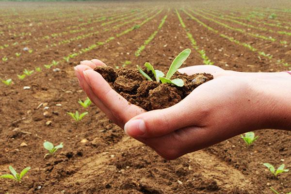 Champ du site expérimental en agroforesterie