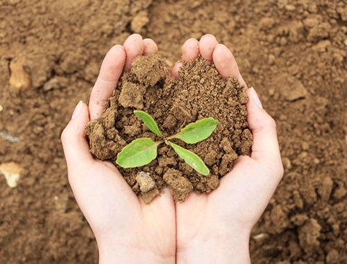 Plante du site expérimental d'agroforesterie Nord Pas-De-Calais - Ramecourt
