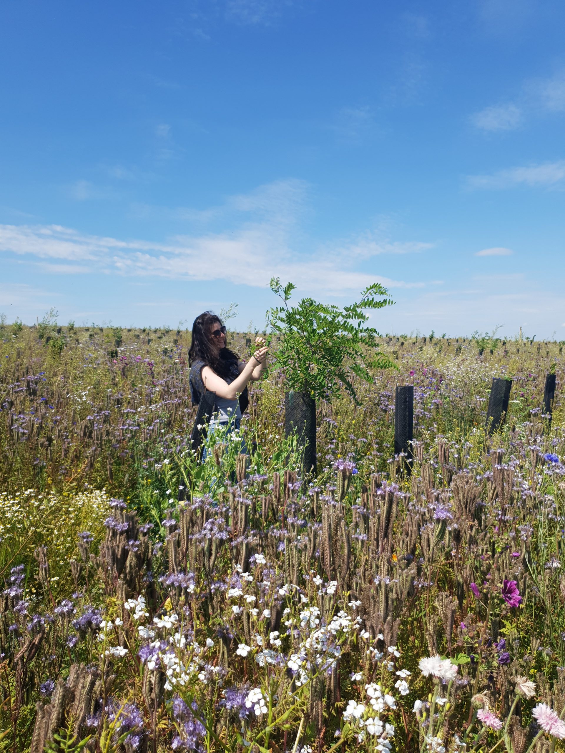 Biodiversité végétale dans les témoins forestiers